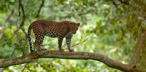Kabini Coorg and Mysore Package - Deluxe