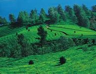 Mysore, Coorg, Ooty - Standard