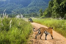 Corbett Wildlife Tour - Premium