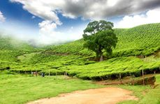 Admirable Munnar - Luxury