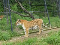 Tiger Tour With Naintial and Mussoorie - Budget