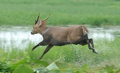 Kaziranga 3 Days Package