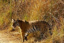 Uttrakhand 6 Nights Package - Deluxe
