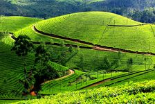 Misty Munnar & Vibrant Alleppey - Deluxe