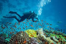 Scuba Diving and Sea Walk In Andaman Island