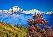 Nepal The City of Himalaya - Standard