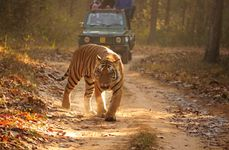 Wildlife Expedition Package
