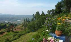 Honeymoon in Ooty