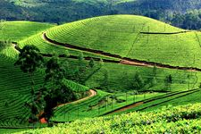 Discover Hills, Wildlife & Backwaters - Luxury